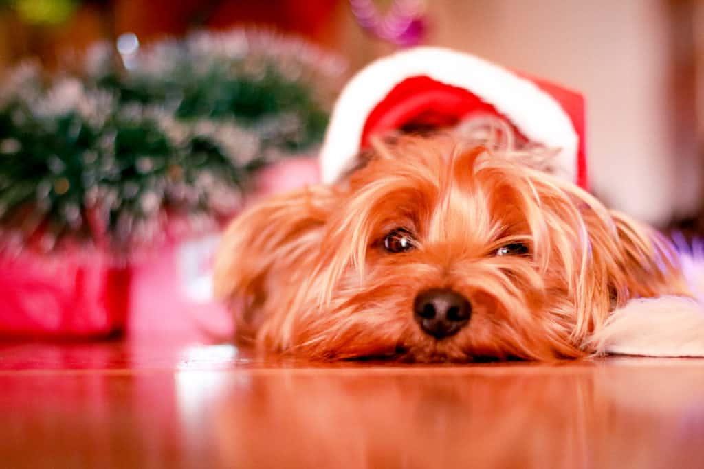 Make money this Christmas earn income holiday side hustle
